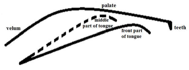 Описание: Описание: F:Статьиpalatal-velar.png